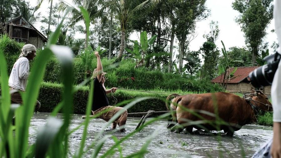 buffalo ride at rice paddies (25 of 25)
