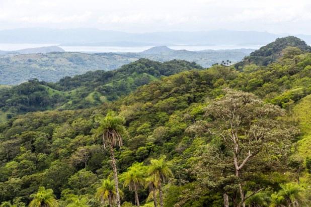 Reserva de Monteverde