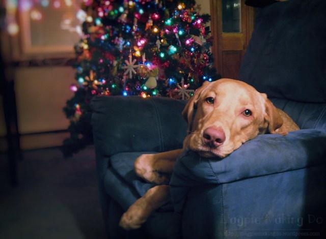 christmas rusalka