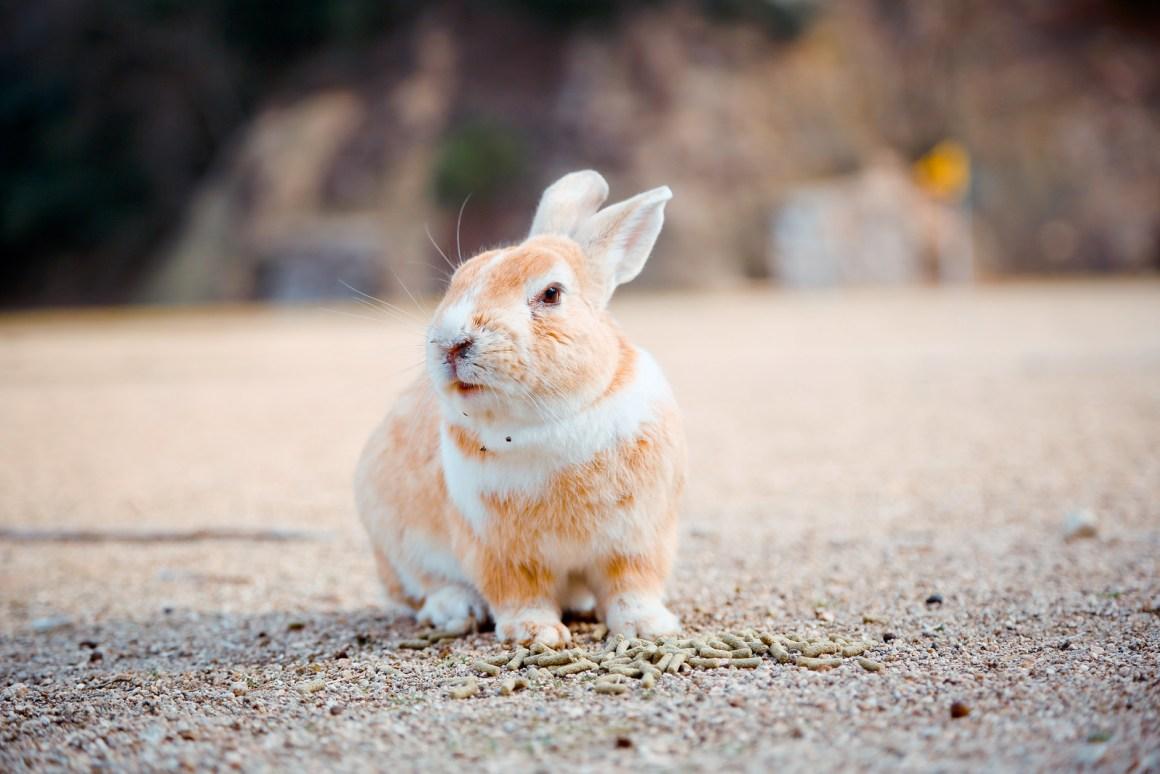 大久野島兔子島 Hiroshima 193