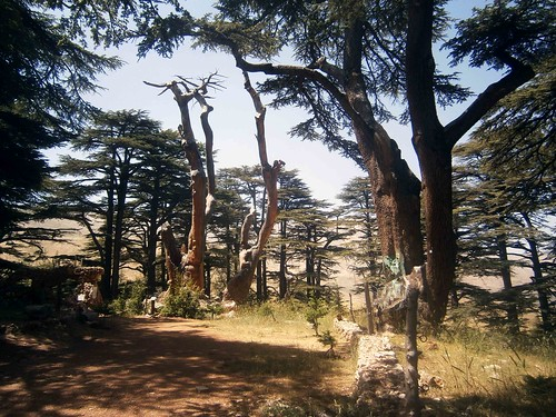 Cedars of God approaching Jesus ree