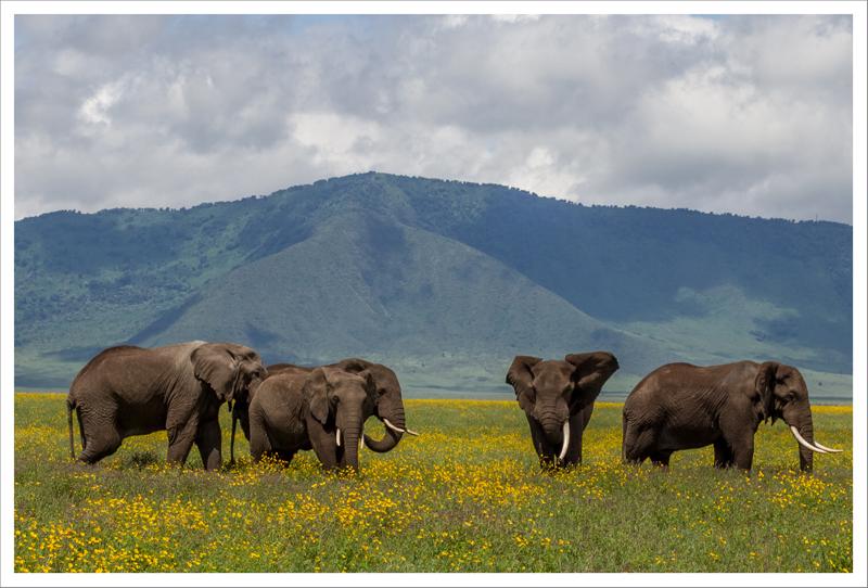 Tanzania-96