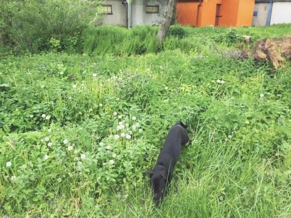 Dog Gonnit (5/19/15)