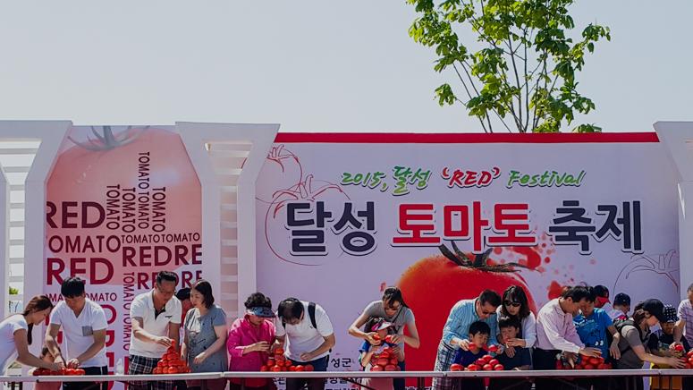 "DAEGU // DALSEONG TOMATO (""RED"") FESTIVAL 달성 토마토 축제"