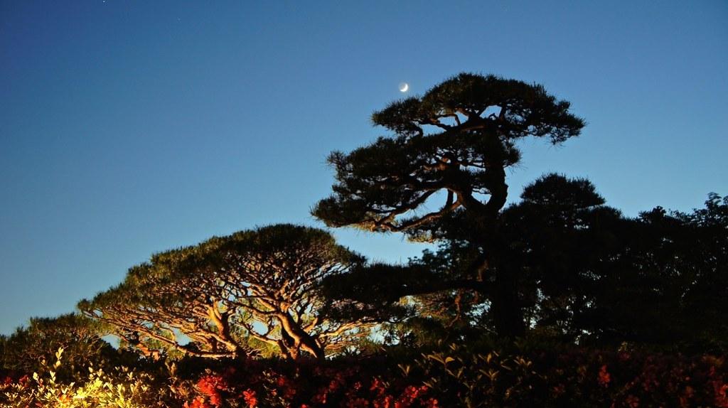 Twilight bliss at Kyu Furukawa Gardens
