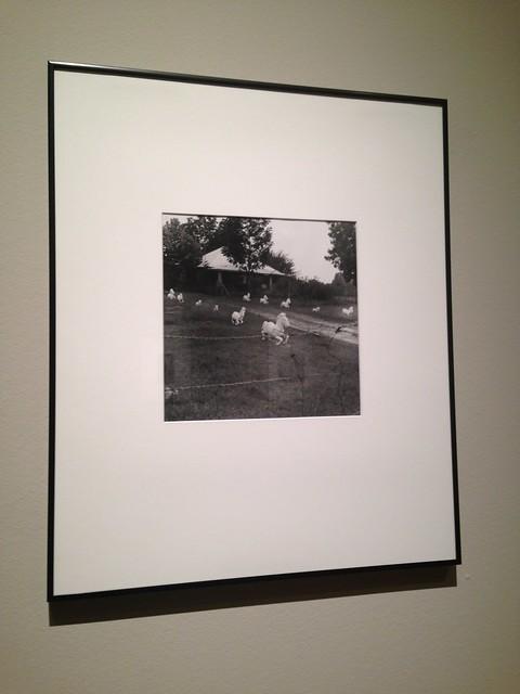 Kathryn Tucker Wyndham: All the Pretty Little Horses