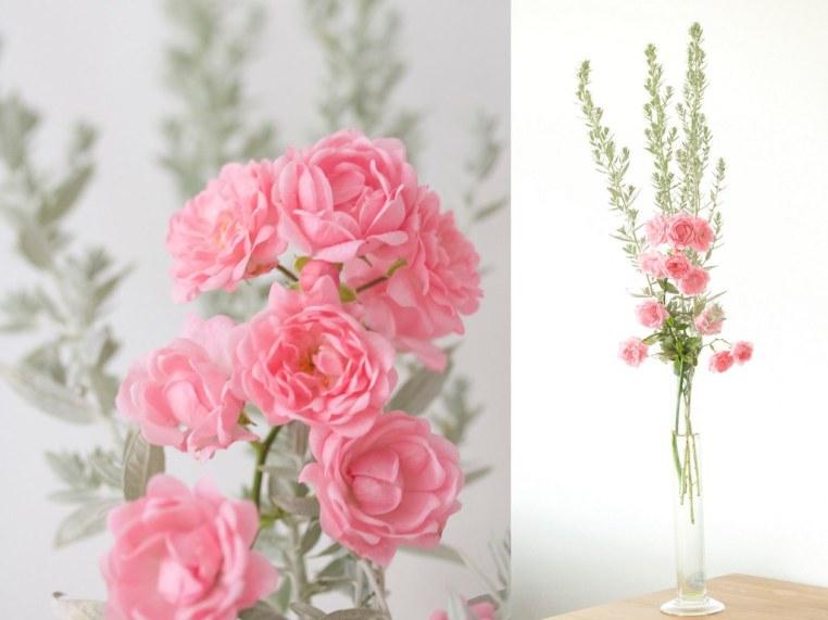 Rose Fairy Wormwood