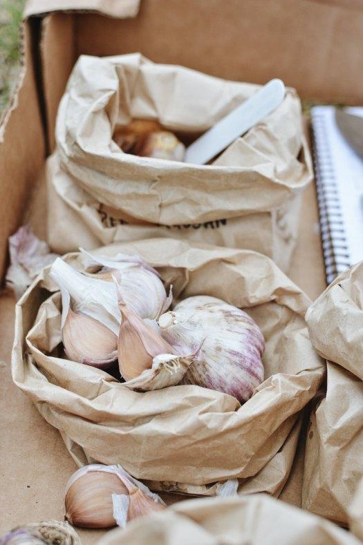 Garlic cloves in paper bags organized by cultivar
