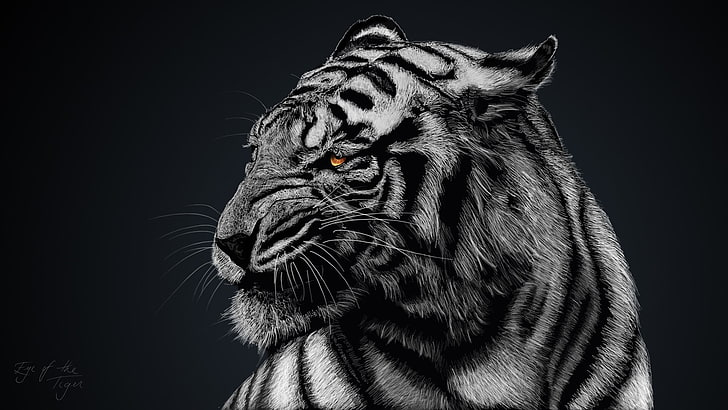 Hd Wallpaper Gray And Black Tiger Greyscale Photo Of Tiger Animals White Tigers Wallpaper Flare