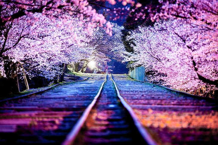 Hd Wallpaper Cherry Blossom Night The City Lights Spring Japan Sakura Wallpaper Flare