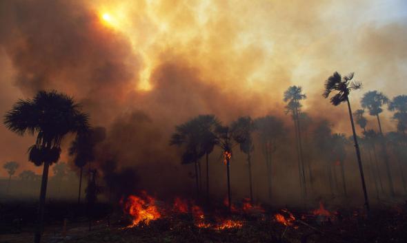 https://i1.wp.com/c402277.ssl.cf1.rackcdn.com/photos/939/images/story_full_width/forests-threats-fireHI_51727.jpg?resize=590%2C353&ssl=1
