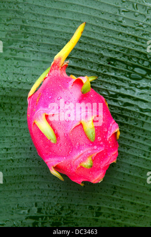 Pitaya or Dragon fruit - Stock Photo