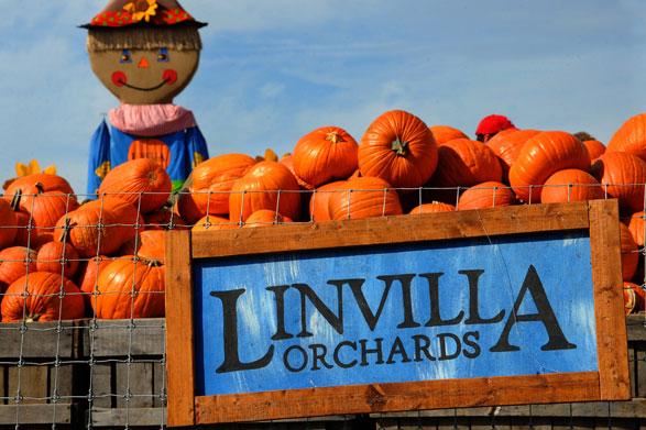 Linvilla Orchards Philaburban Mom