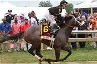 Oxbow horse