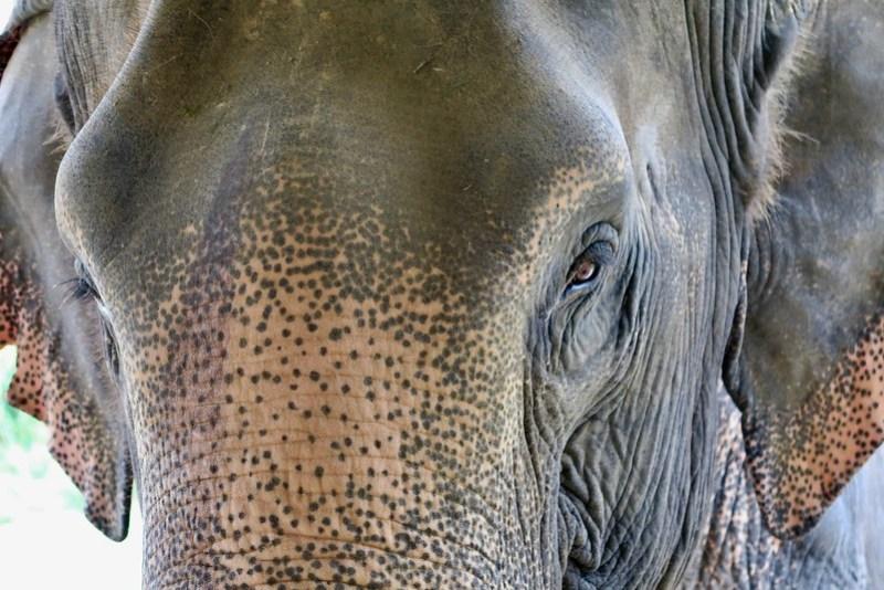 Honeymoon in Thailand - Elephant Hills Khao Sok National Park