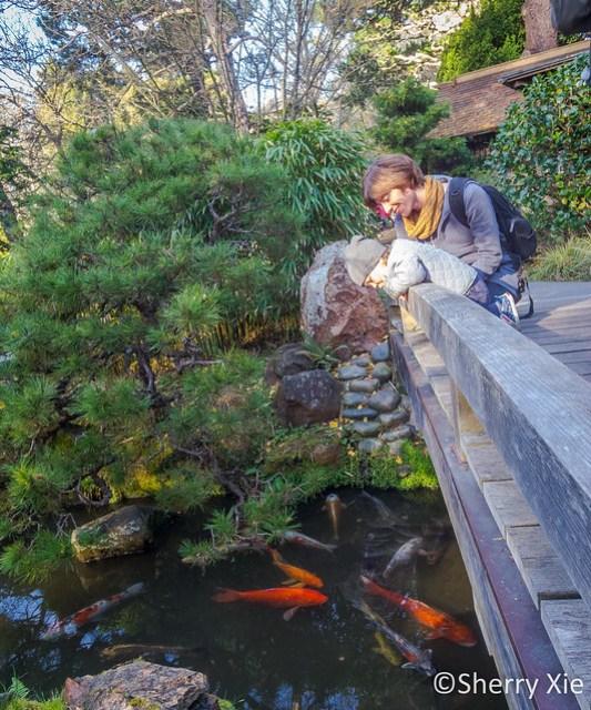 San Francisco Japanese Tea Garden