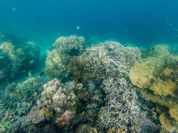 Snorkel Port Barton