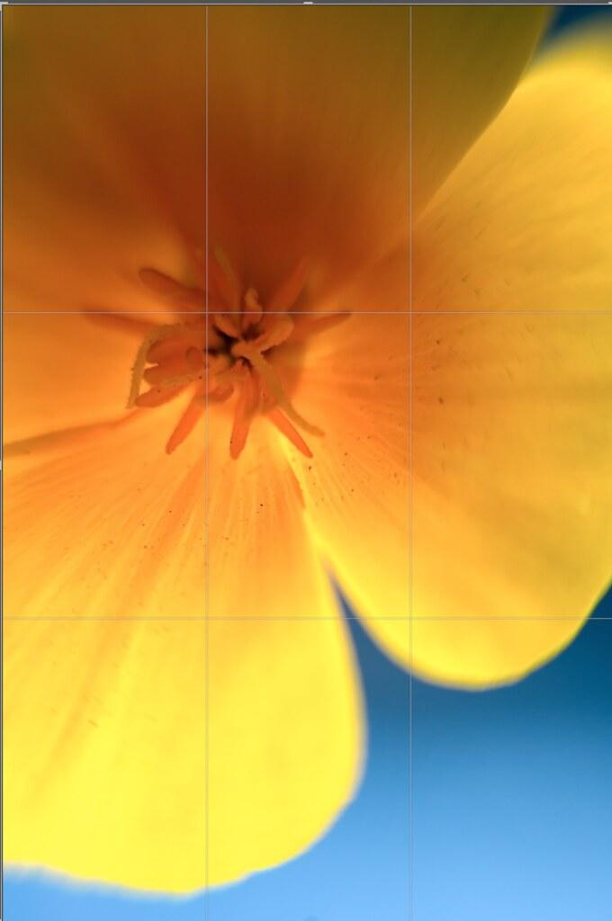 Nikon D70, Lensbaby 2.0 w/ macro adapter