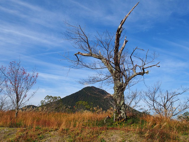 Tree and Mikamiyama (三上山)