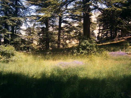 Cedars of God Meadow
