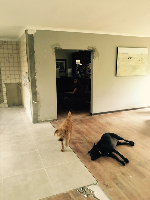 Kitchen renovation: dogs are now used to the space