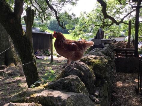 Farm 3.4
