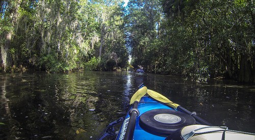 Lowcountry Unfiltered at Okefenokee-137
