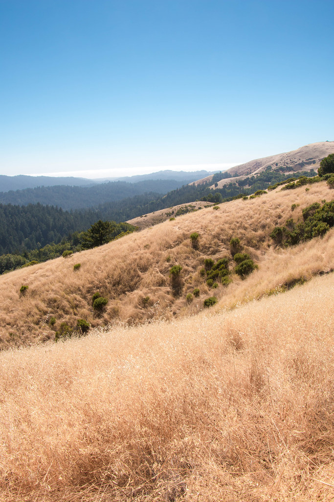 08.07. Russian Ridge: Mindego Hill
