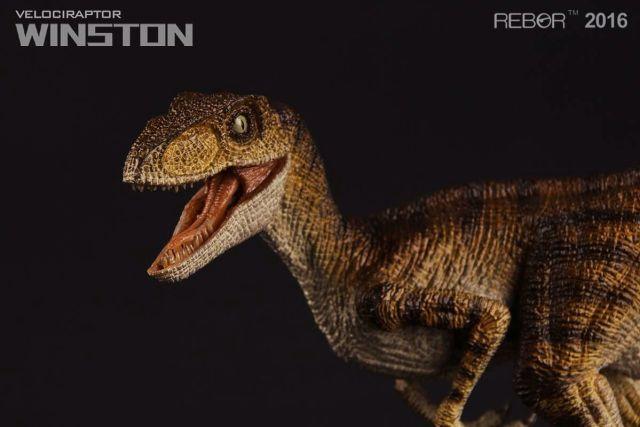 02 Raptor Rebor 2016 'Winston'