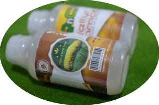 Khasiat Qnc Jelly Gamat Untuk Penyakit Ginjal
