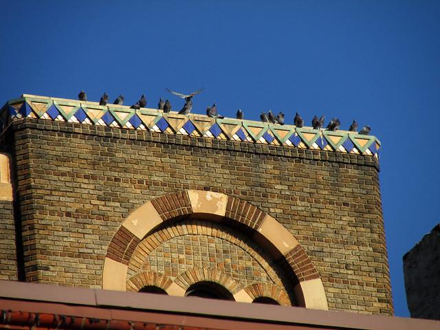 Pigeons at Palumbo