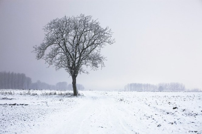 cold-snow-landscape-nature-large