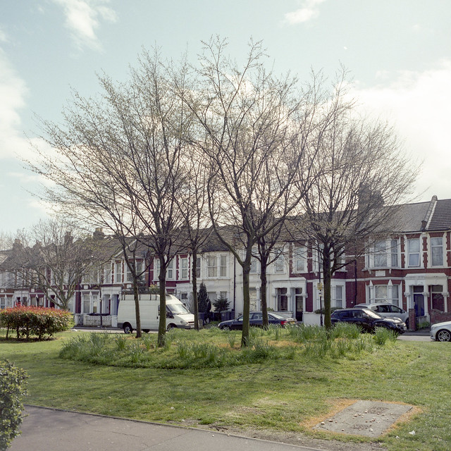 Tree Trust for Haringey, The Seven Sisters, 1996