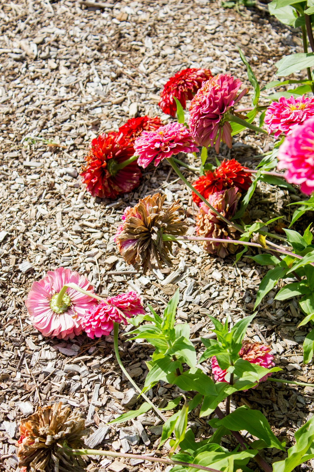 tyler-arboretum-falling-flowers