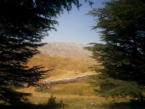 Cedars of God Views Mountain