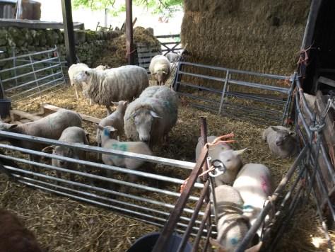 Farm 3.2
