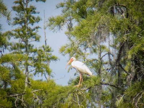 Lowcountry Unfiltered at Okefenokee-277