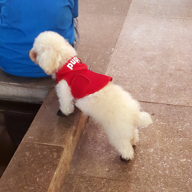 20150814_185024 Dog at GB3