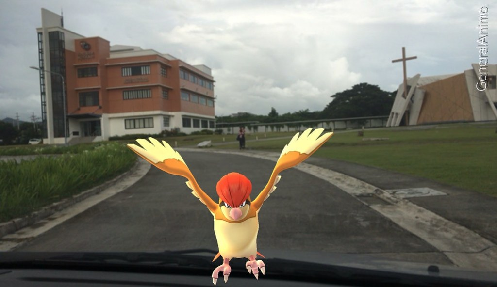 Pidgeot in School