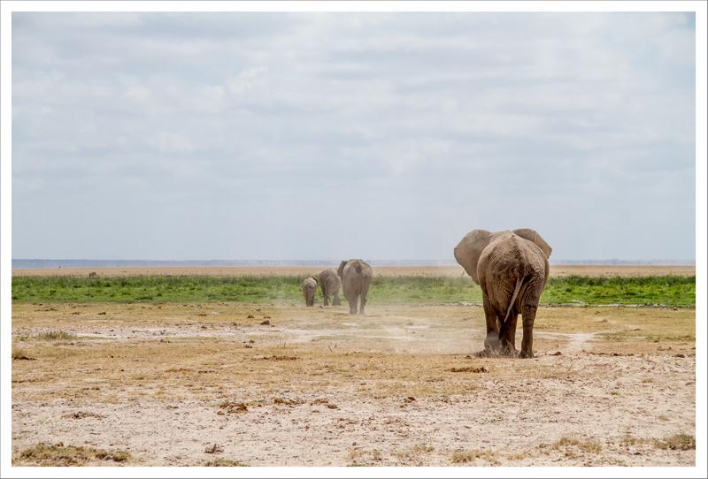 Amboseli-117