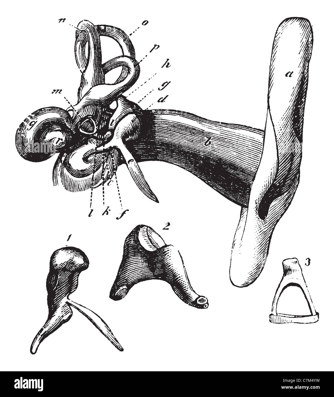 Human Ear Anatomy Or Parts Of The Hearing Aid Vintage