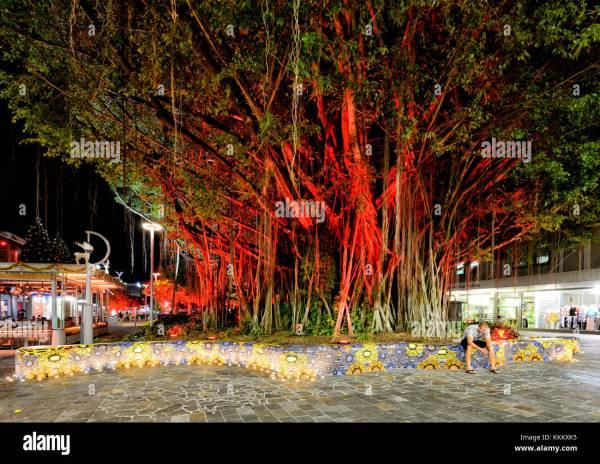 Australian Christmas Tree Stock Photos & Australian ...