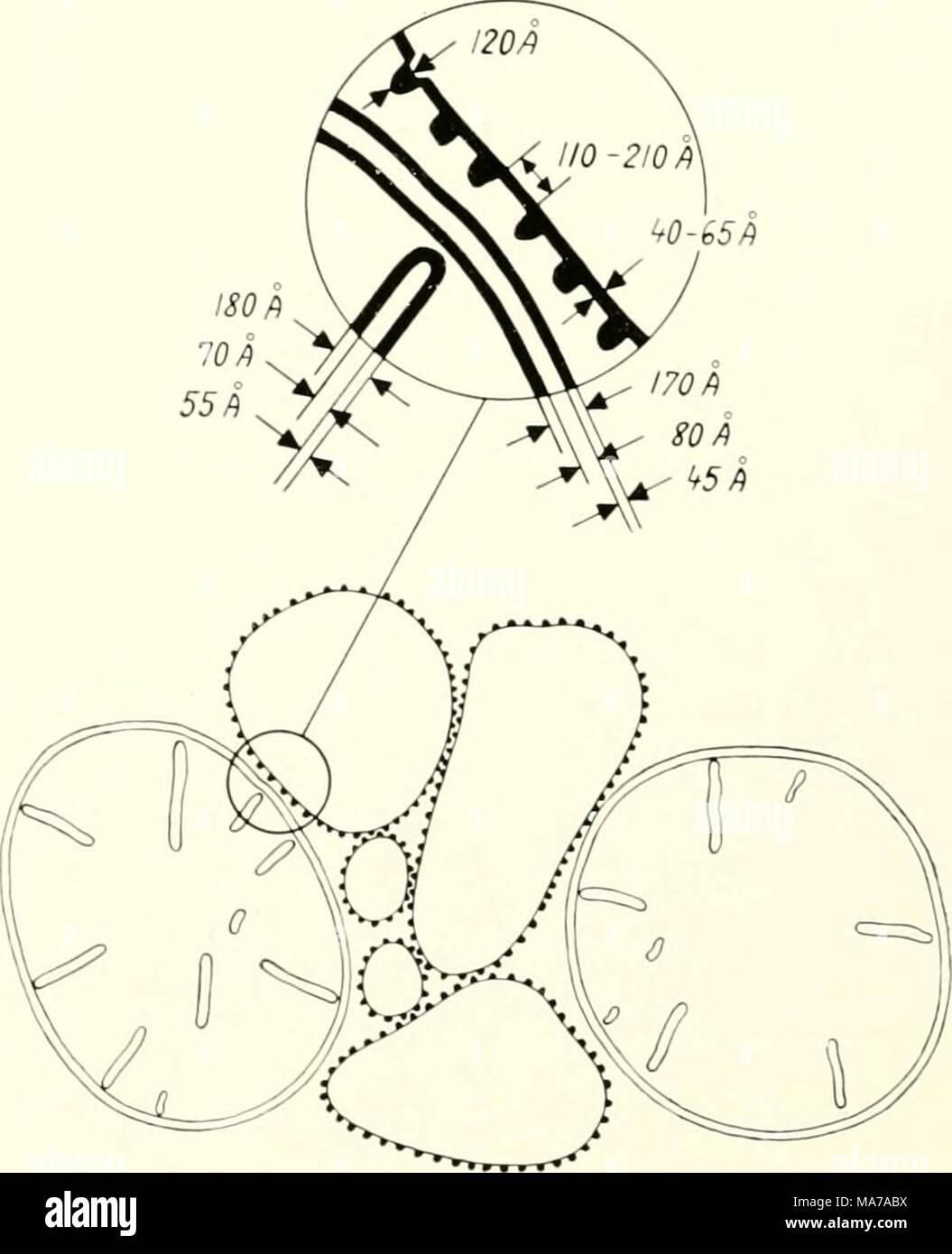 Ziemlich schematische zeichnungen elektrisch fotos elektrische