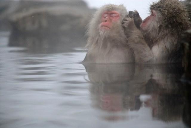 Monkeys Jigokudani // Tokyo Trip