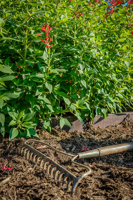 Rake in a Garden Bed at the White House Kitchen Garden