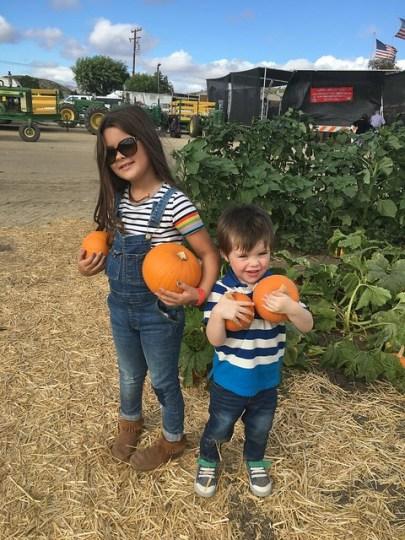 picking out pumpkins