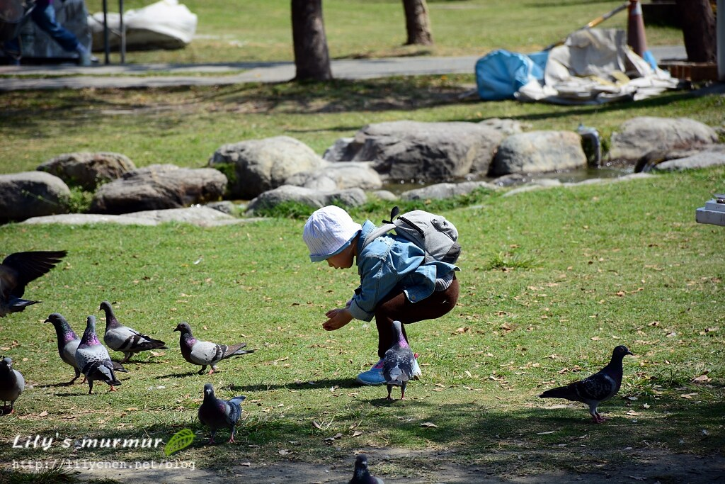 小妮人生中第一次餵鴿子,不過她不是用撒的而是全放在地上讓鴿子來吃。