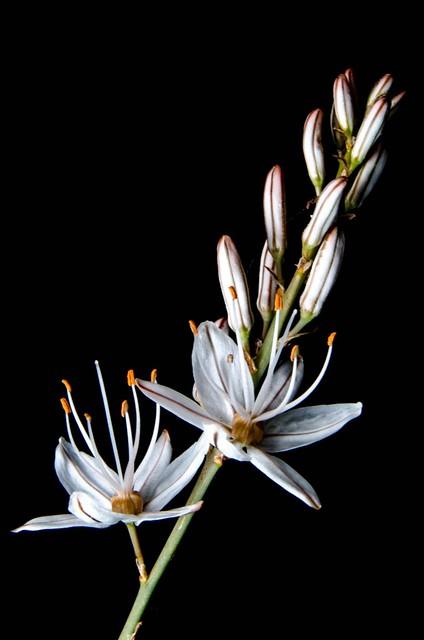 03 Belleza primaveral