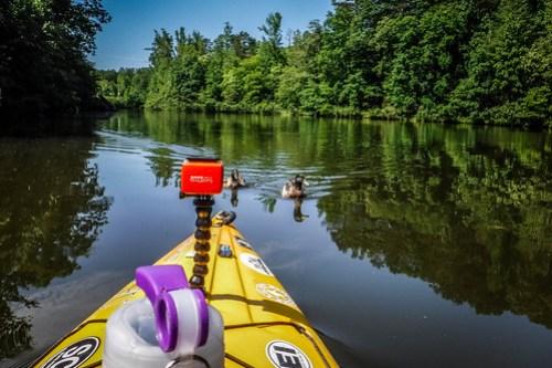 Lake Oolenoy Kayaking-23