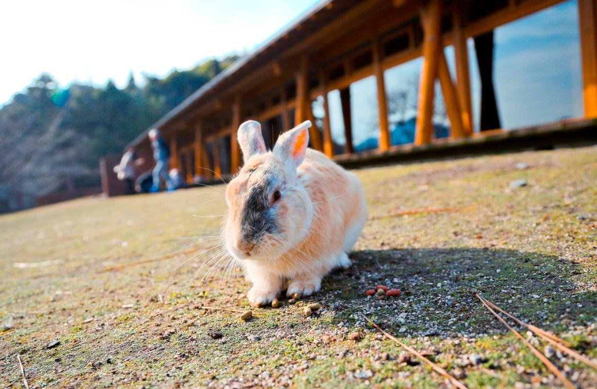 大久野島兔子島 Hiroshima 202